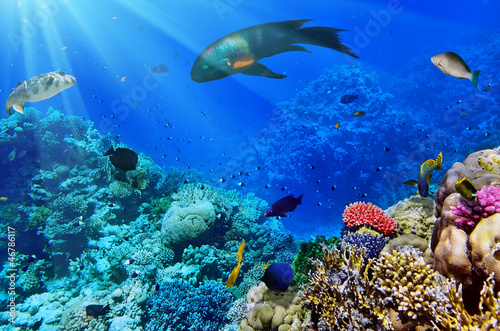 Staande foto Koraalriffen Coral and fish in the Red Sea.Egypt