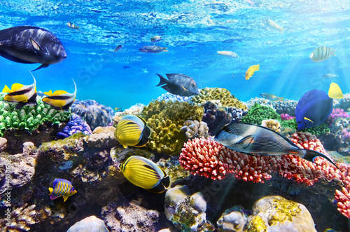 Fotografie, Obraz  Coral and fish in the Red Sea.Egypt