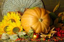 Excellent Autumn Still Life With Pumpkin