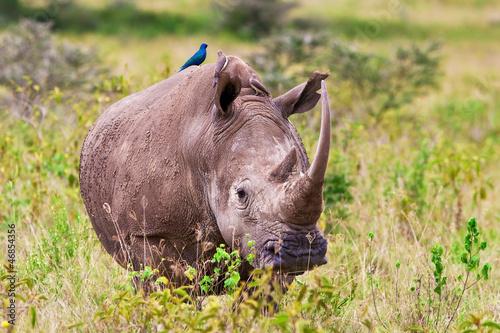 Spoed Foto op Canvas Neushoorn Rhinoceros, Lake Nakuru National Park, Kenya