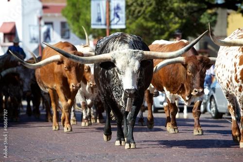 Tuinposter Texas Texas Longhorns