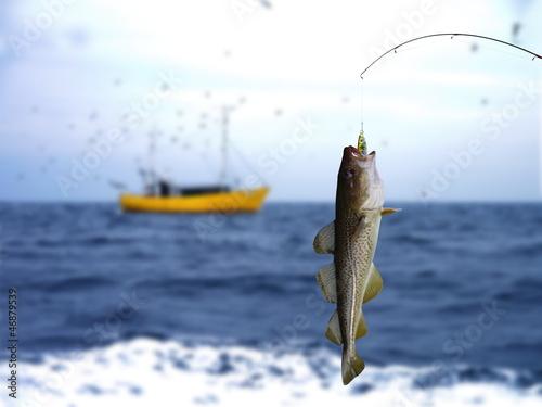 Printed kitchen splashbacks Fishing codfish