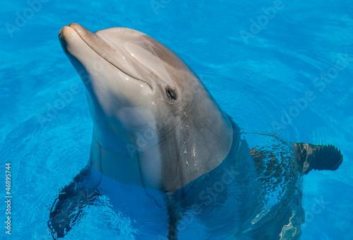 In de dag Dolfijn dauphin