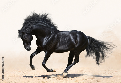 Canvas Print Black horse galloping