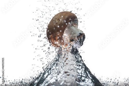 Pieczarka w wodzie