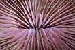 Nahaufnahme einer Pilzkoralle