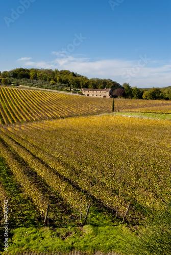 Foto  Chianti wine region vineyards, Tuscany, Italy