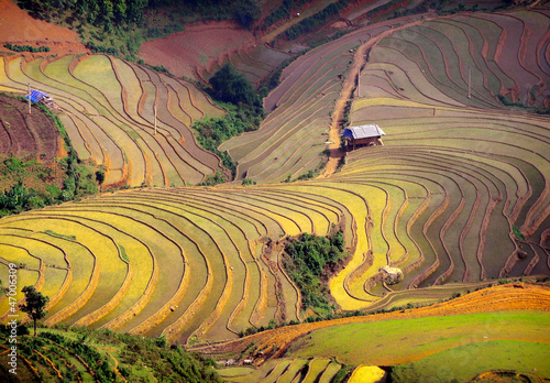 Spoed Foto op Canvas Oranje rice field on terraced. Terraced rice fields in Vietnam