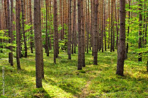 Fototapeten Wald Deep in the forest