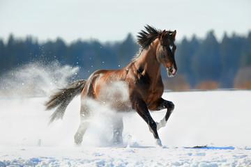 fototapeta brązowy koń