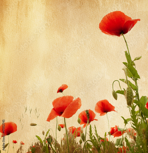 old paper texture with poppies плакат
