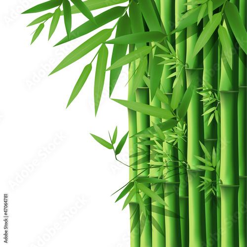 bambus-ilustracji-wektorowych