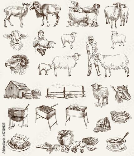 sheep breeding Wallpaper Mural