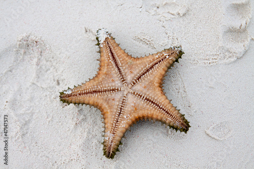 Starfish on clear water Canvas Print