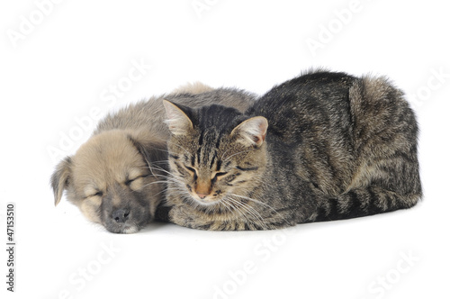 cat and dog © fotomaster