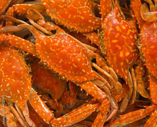 Fotobehang Schaaldieren Blue crab boiled