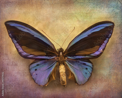 Deurstickers Vlinders in Grunge Vintage background with butterfly