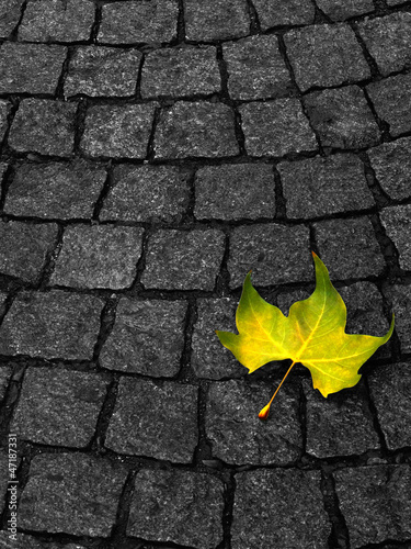 Photo Упавший лист