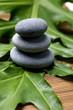 Three stones on green leaf