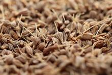 Dried Herbs In Macro