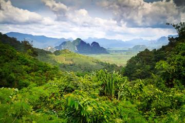 Fototapeta Rainforest of Khao Sok National Park in Thailand