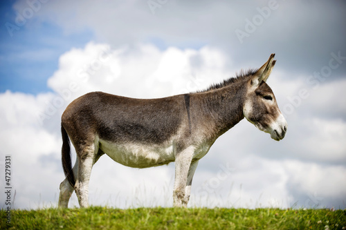 Norfolk Broads, Donkey