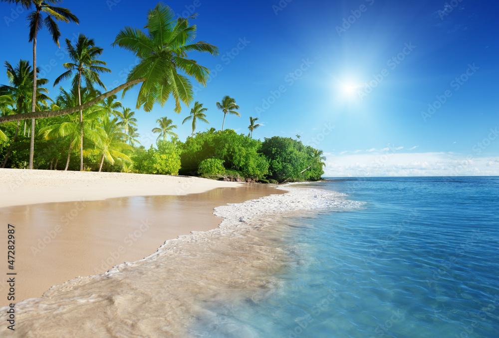 Fototapeta caribbean sea and palms