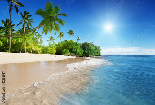 Obraz caribbean sea and palms - fototapety do salonu