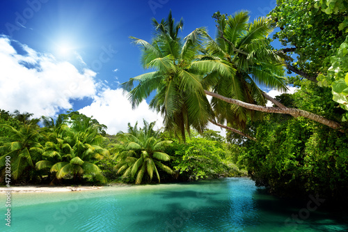 Motiv-Rollo Basic - lake and palms, Mahe island, Seychelles