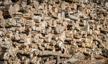Pile Of Felled Pine Logs Showing Ends