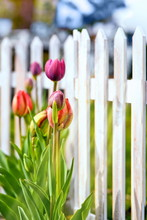 Frühling Am Gartenzaun