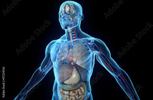 Fotografia 3D human body with internal organs