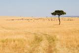 Fototapeta Sawanna - Wide Savannah in Masai Mara National Reserve