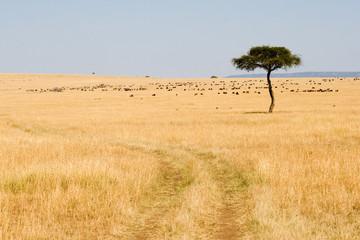 Wide Savannah in Masai Mara National Reserve