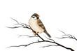 canvas print picture - Spatz Sperling Vogel freigestellt