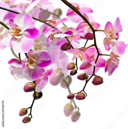 bukiet-orchideii
