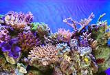 Fototapeta  - Underwater life