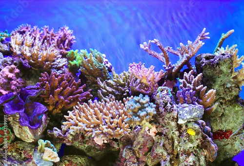 Photo Stands Coral reefs Underwater life