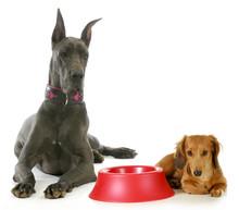 Dog Dinner Time