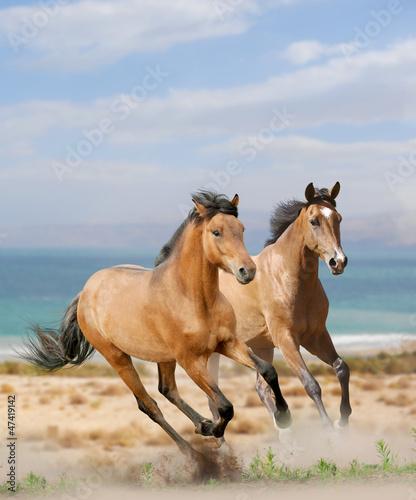 konie-w-pustyni
