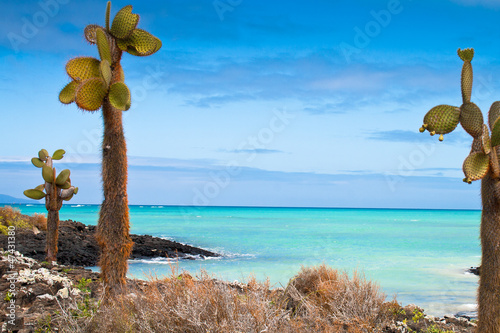 Poster South America Country Galapagos sea view