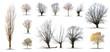 Leinwanddruck Bild - lot d'arbres sans feuilles sur fond blanc en haute définition