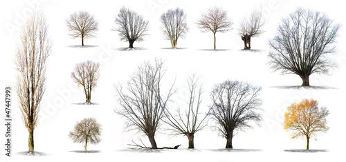 lot d'arbres sans feuilles sur fond blanc en haute définition Canvas Print