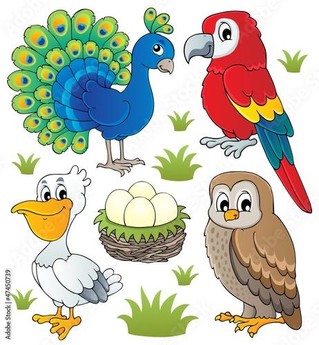 zestaw-motywow-roznych-ptakow-2
