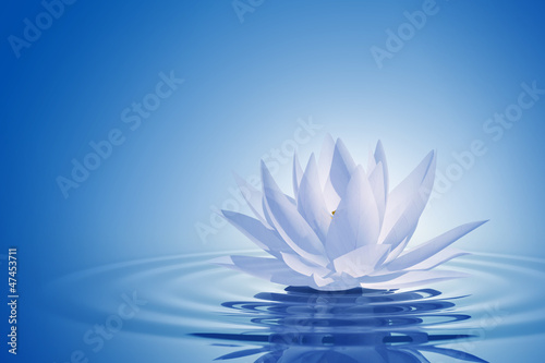Floating waterlily Wallpaper Mural