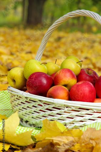 Fruits basket of fresh ripe apples in garden on autumn leaves