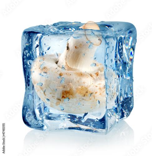 Staande foto In het ijs Ice cube and champignon