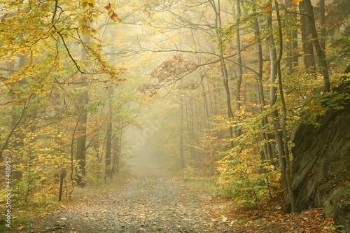 Papiers peints Foret brouillard Autumn beech forest in the fog