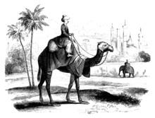 1001 Nights - Camel Rider
