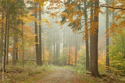 Foto auf Acrylglas Wald im Nebel Forest trail in the mountains on a misty October's morning
